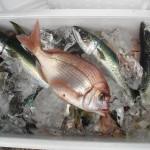 第25回釣り大会釣果