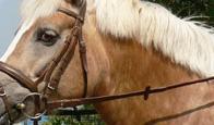湯の山乗馬クラブ